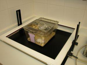 Mouse activity box