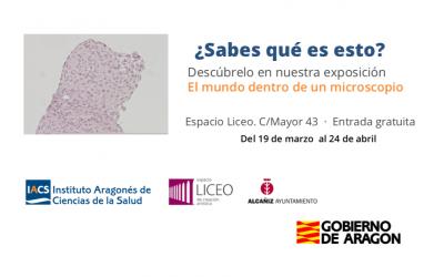 La exposición El mundo dentro de un microscopio encara sus últimos días en Alcañiz